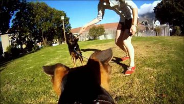 Крепление экшн-камеры на собаку